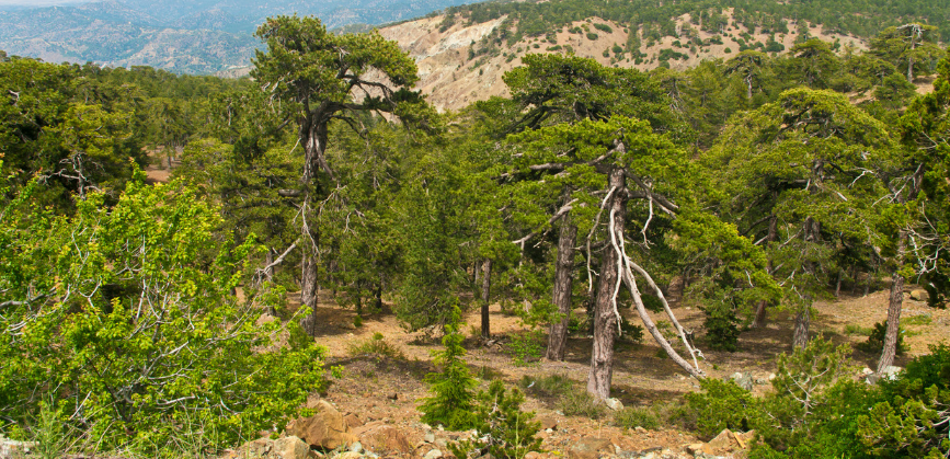 troodos national forest park
